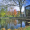 Chapel-Pond-Brandeis-University.png