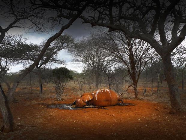 3_kenya_dead_elephant.jpg