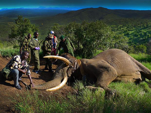 1_kenya_elephant_mountain_bull_FB.jpg