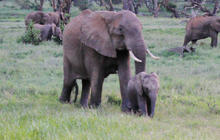 Clinton calls on leaders to stop epic African elephant slaughter