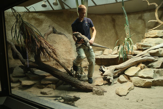 Berlin Zoo conducts annual inventory
