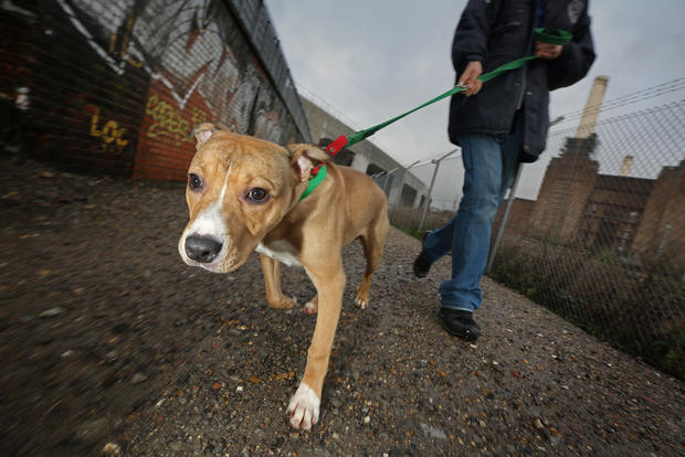 Rescue takes in holiday strays