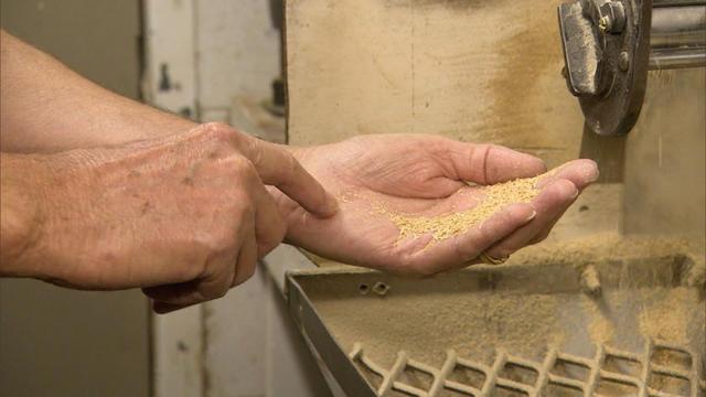 Texas rice farmers bear brunt of drought