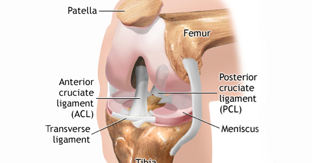 Torn meniscus treatments: Physical therapy just as good as surgery ...