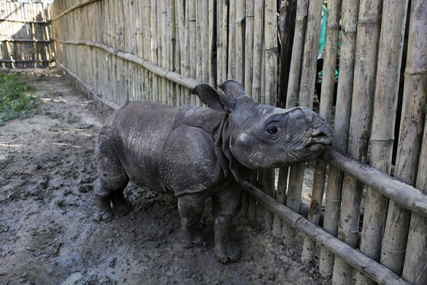 Illegal rhino horn trade