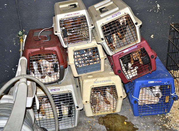 Horrific conditions at dog shelter (GRAPHIC IMAGES)