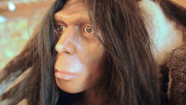 neanderthal-updated.jpg