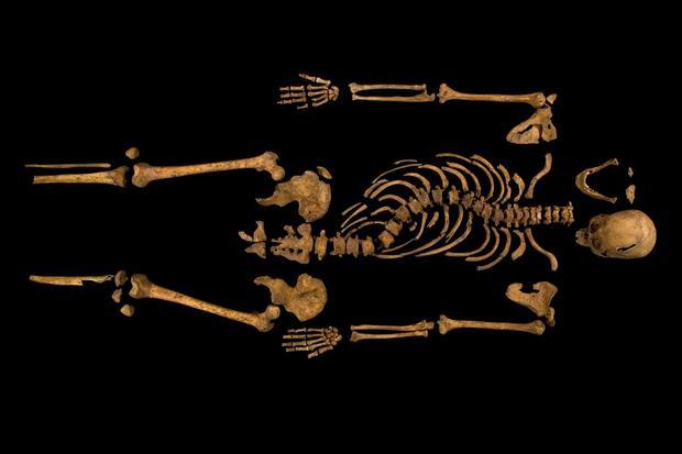 Skeletal remains of King Richard III