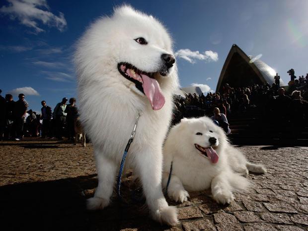 Westminster Dog Show: The big-money breeds