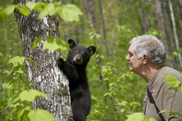 Bear rescuer takes in 27 cubs