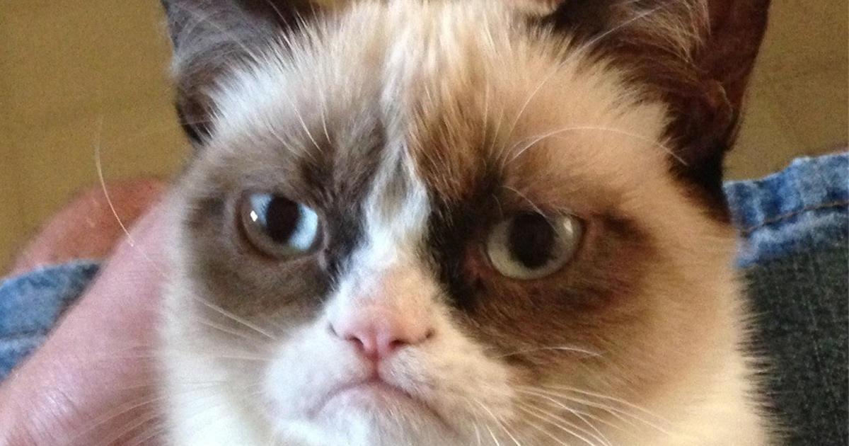 Grumpy Cat Jon Snow Meme Cute Cat 2018