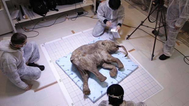 Mammoth92305700.jpg