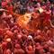 india_lathmar_holi_festival_AP456643434304_fullwidth.jpg