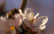 Nature: Bees