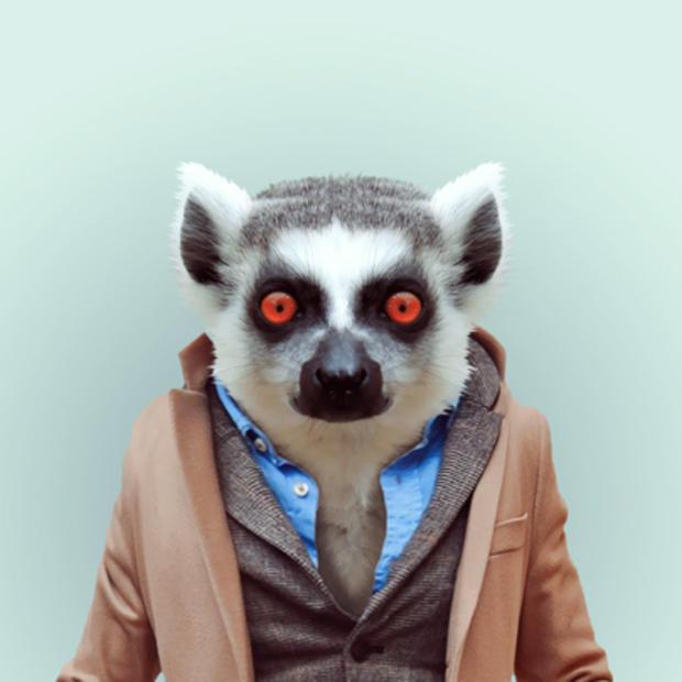 lemur2_1.jpg