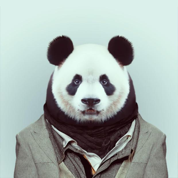panda_317.jpg