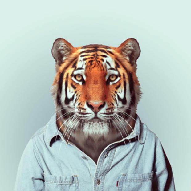 tiger_164618405.jpg
