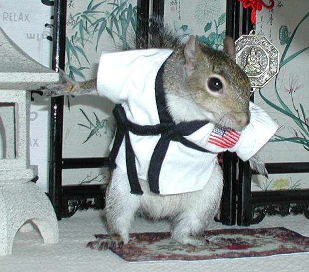 032_Sugar_Bush_Squirrel_Kung_fu_Fighter_1.jpg