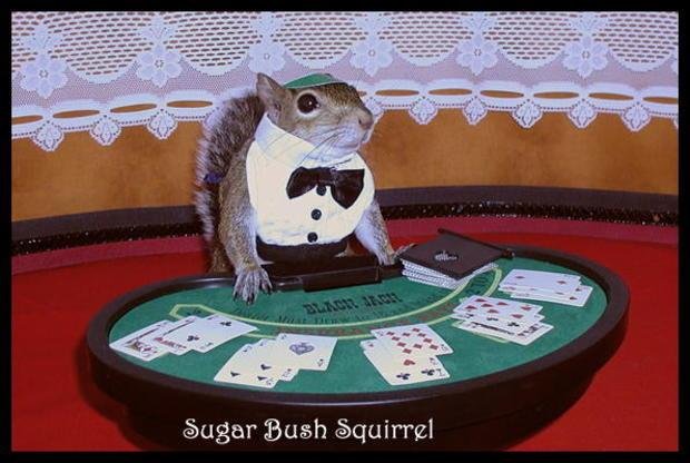 026_Sugar_Bush_Black_Jack_Dealer_(3).jpg