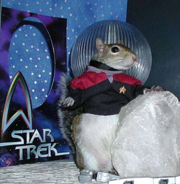 024_Star_Trek_Captain_Sugar_Bush_Squirrel.jpg
