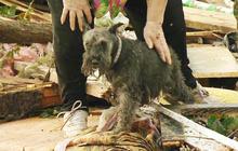 Okla. tornado survivor finds dog buried alive under rubble