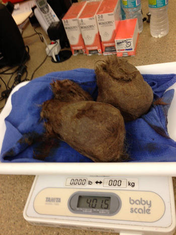 Surgeons remove 4-pound hairball from tiger