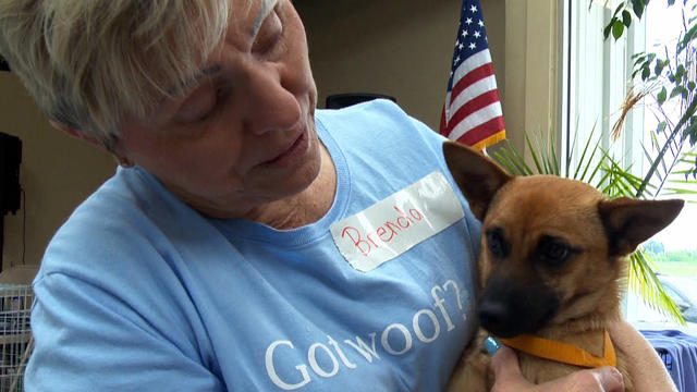 Okla. rescue brings dogs back to their owners