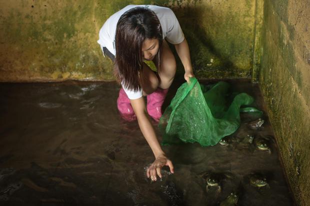 Singapore frog farm sales leap