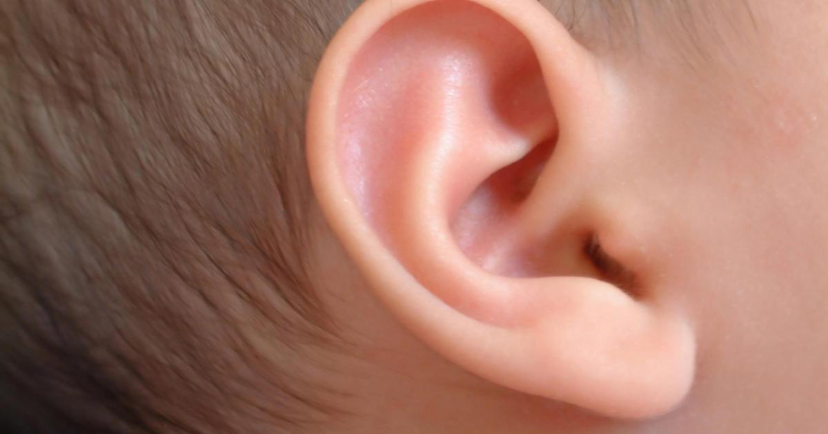 Уши в картинках для детей, два года