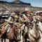 JW_Cowboys_pic.jpg