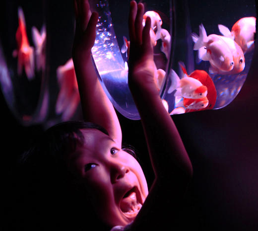 Japan's art aquariums