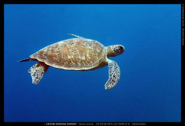 Catlin_Seaview_Survey._HI_L_23o26_28.7822S_151o54_8.2122E_Turtleblue.jpg