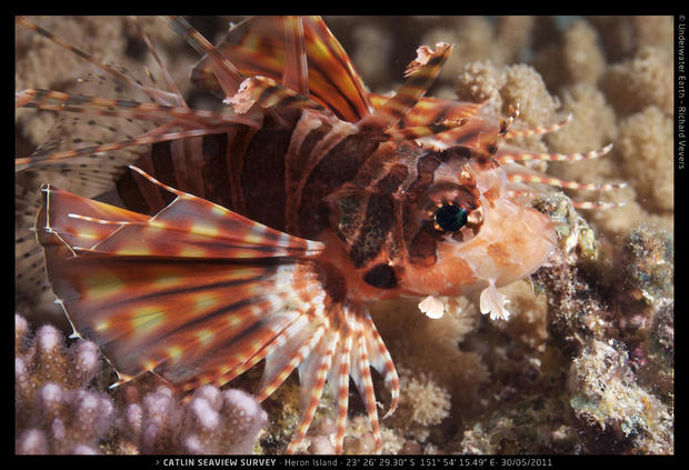 Catlin_Seaview_Survey._HI_L_23o26_29.3022S_151o54_15.4922E_Fish_Macro.jpg