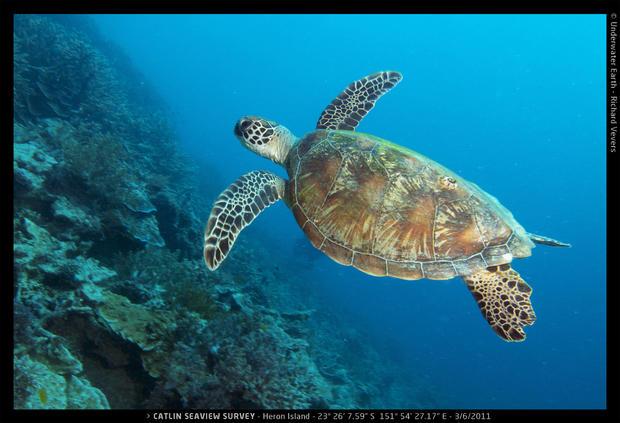 Catlin_Seaview_Survey._HI_L_23o26_7.5922S_151o54_27.1722E_Turtle.jpg
