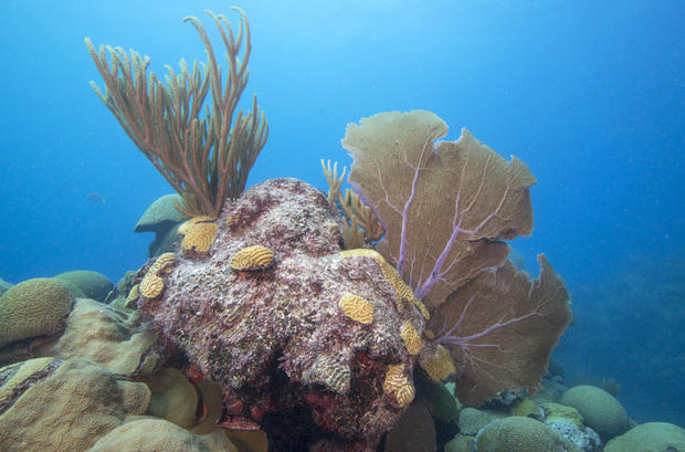 Catlin_Seaview_Survey__Bermuda_Coral_Disease.jpg