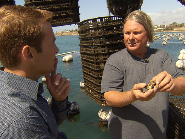 Last year, Dennis Peterson says his company could only get a quarter of the young oysters, or seed, they need from hatcheries in the Pacific Northwest.