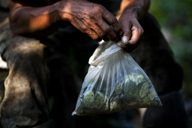 Peru's coca industry
