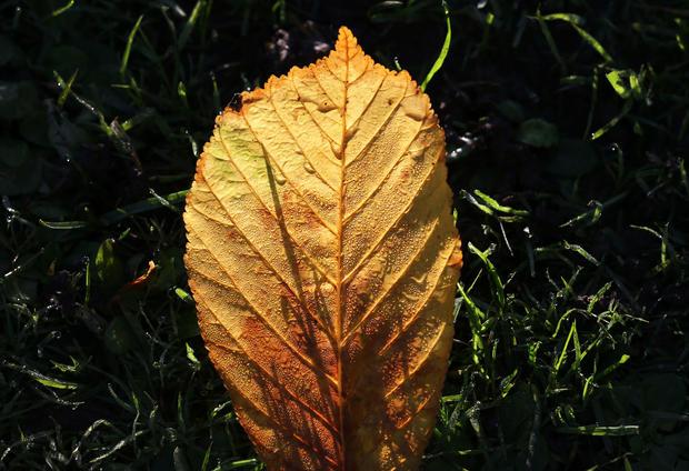 Scenes of autumn