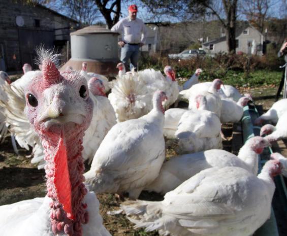 Tipsy turkeys