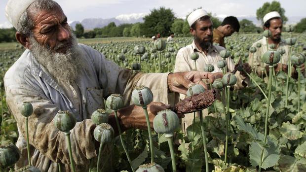 Afghanistan's opium problem
