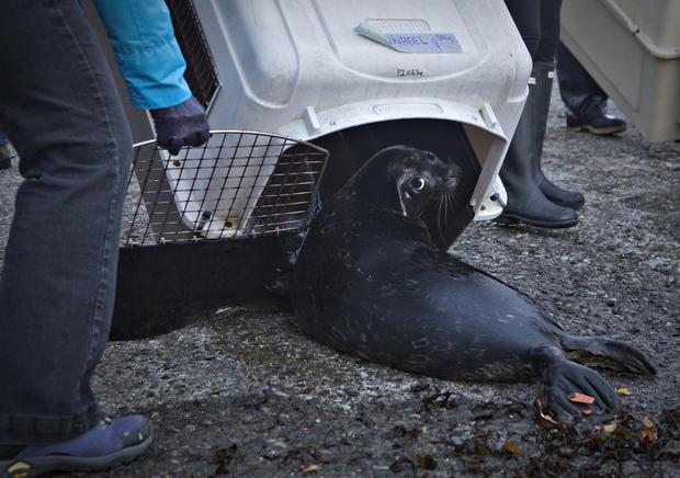 Satellite seals