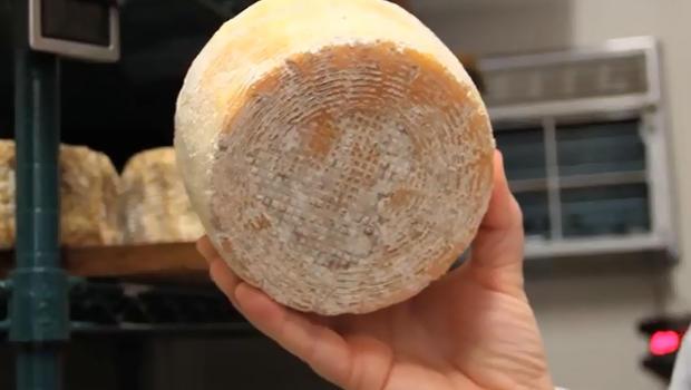 Humancheese