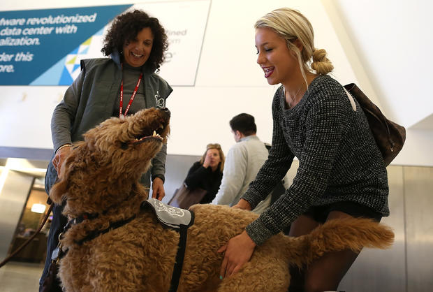Therapy dogs San Fran Int'l airport