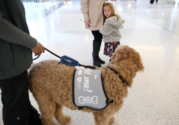 """Wag Brigade"" at San Francisco airport"