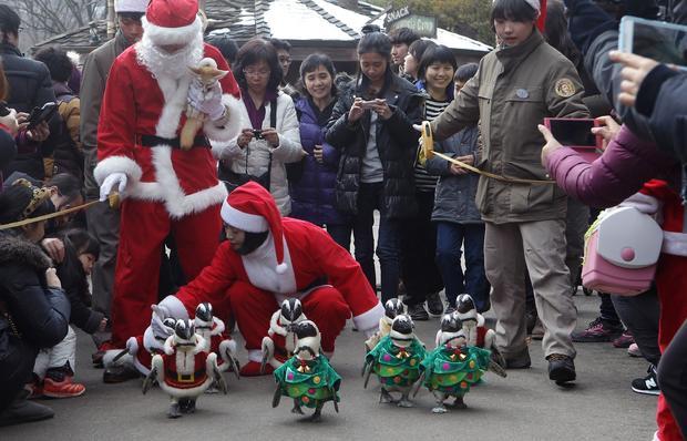 Christmas penguin parade