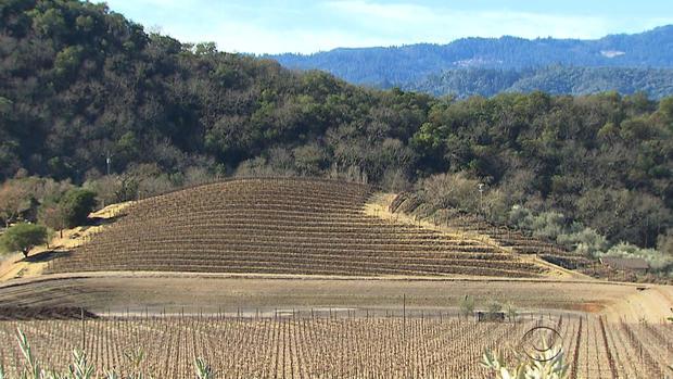 vineyards-california.jpg