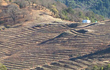 Historic drought takes toll on California's wine industry