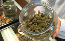 Insurance business growing alongside marijuana boom