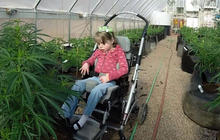 Texas family moving to Colorado to get medical marijuana for 8-year-old