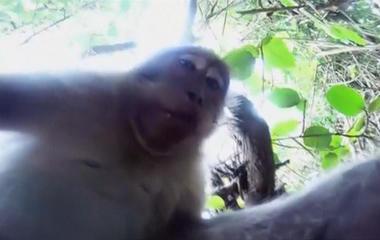 "Monkey steals tourist's camera, takes ""selfie"""